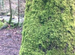 Moss Covered Tree Trunk on the Trail
