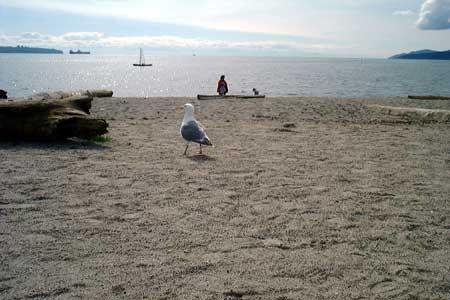 Seagulls Walking on the Beach