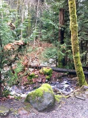 Mossy Trees and Rocks