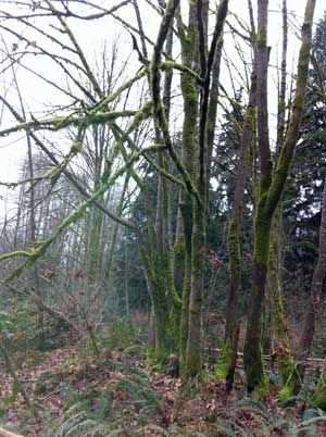 Trees Along the Trailway