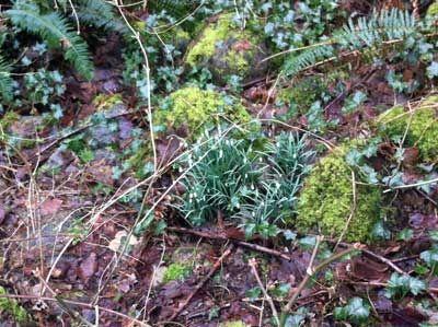 Brilliant Vegetation on a Gray Day