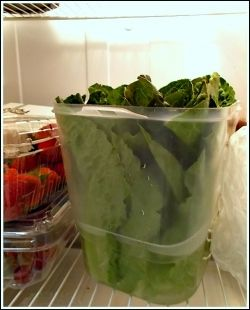 Romaine Lettuce Leaves In Container
