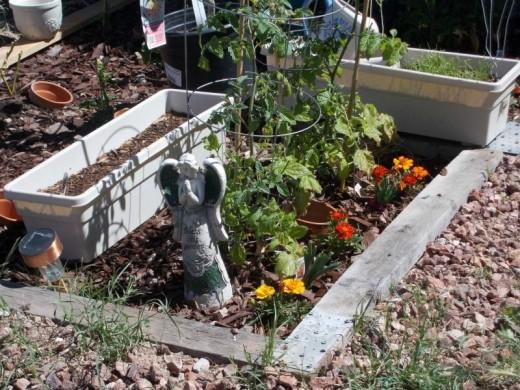 Garden Plot 2014
