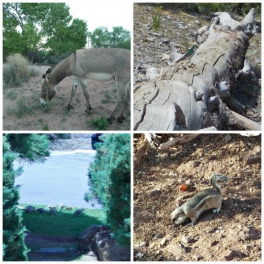 Wildlife On Mt Charleston Collage