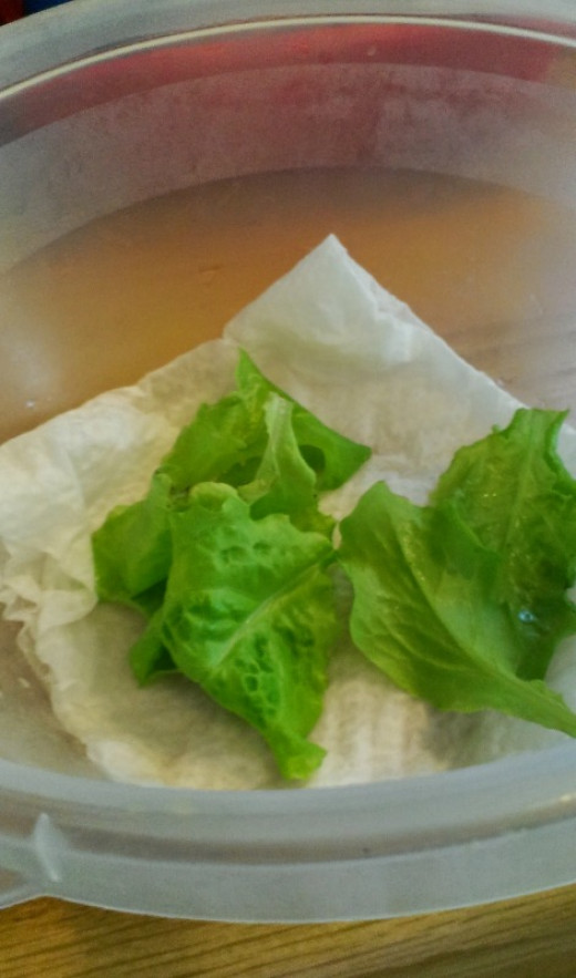 Rinsed lettuce leaves may keep for a few days in the fridge. Layer a piece of paper towel on the bottom of a plastic container to maintain moisture.