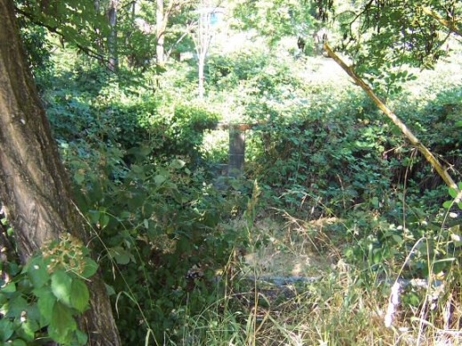 A cellar overgrown with brambles. Could this be the cellar of Henry Doolittle's house?