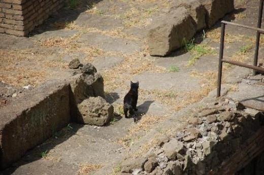 A cat in Torre Argentina