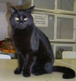 Tarek, a Cat of Rome