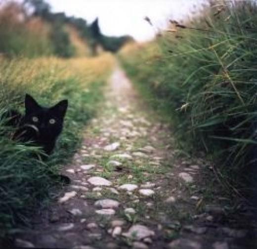 The Watching Cat watching you