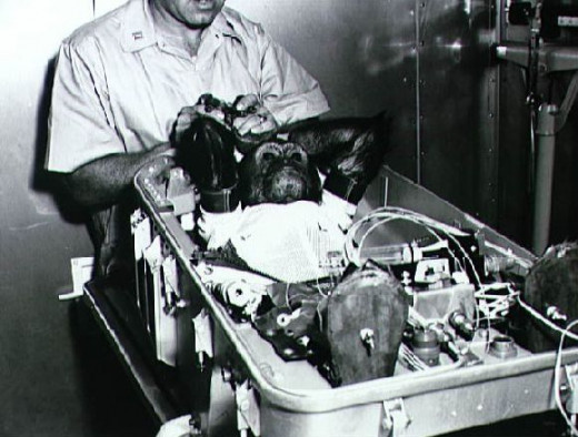 Enos the space chimp being inserted into the Mercury-Atlas 5 capsule, 1961
