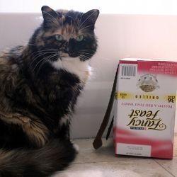 Cat waiting for Dinner
