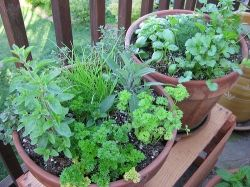 Fresh herbs add a bit of nutrition along with flavor
