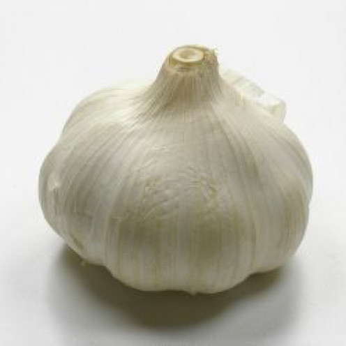 Garlic bulb containing a number of individual cloves