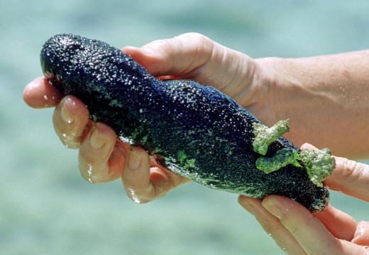 Common Black Sea Cucumber, Ipao Beach, Tumon Bay, Guam