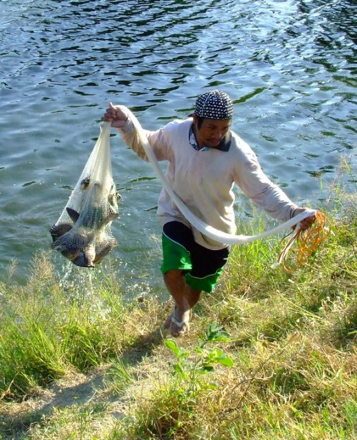 Tilapia Fish Farming In The Philippines