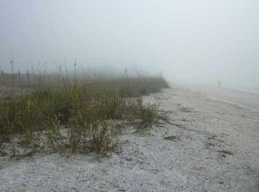 Sea oats are everywhere on Lovers Key, serving as ground cover to minimize erosion. Notice the couple  in the distance, enjoying the solitude.