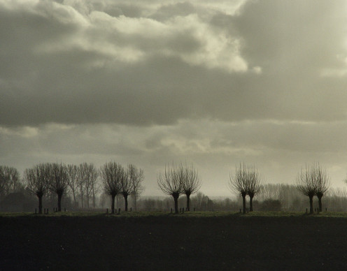 Double row of pollard willows on a dyke near where I live in Zeeuws-Vlaanderen