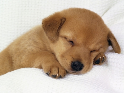 Cute puppy sleeping.  But watch out when they wake!
