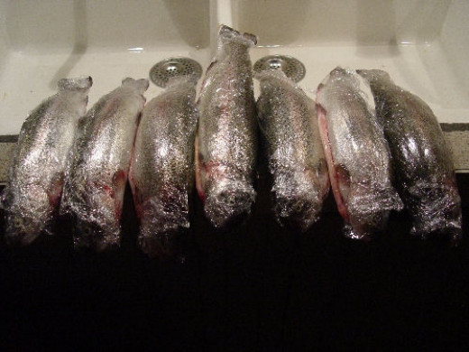 Frozen trout coming out the freezer