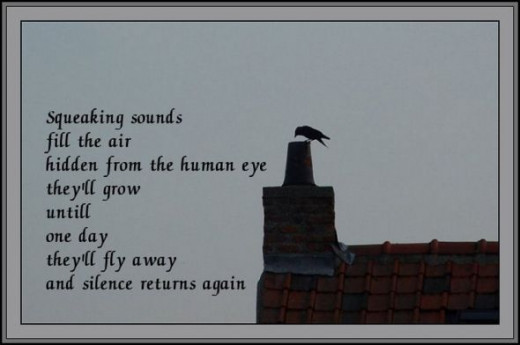 Jacksdaws had made a nest in one of our (not in use) chimneys.