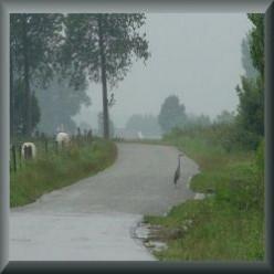 * Sealandic Flanders in The Netherlands