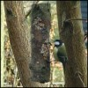 * How to make a bird feeder from a log