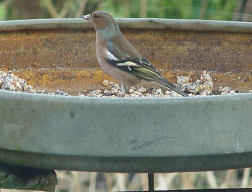 Bird feeder platform in Winter