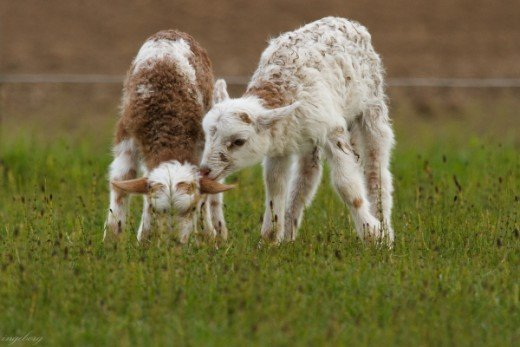 So you are my brother lamb?