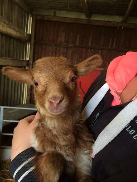 Am I not a gorgeous lamb?