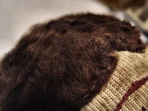 Ragdoll Hair