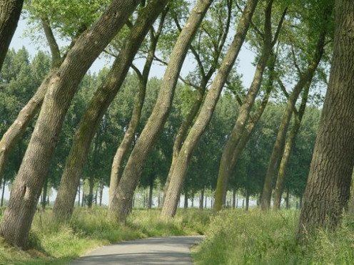 Bended trees