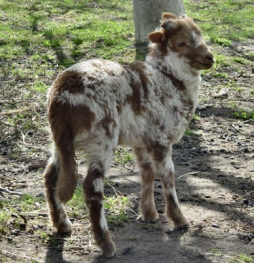 Peter-B three weeks old