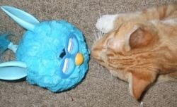 Cat vs Furby