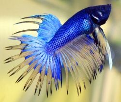 Joey was a Betta Fish that we loved and hated to see get sick