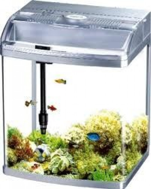 Betta fish tanks hubpages for Betta fish tank size