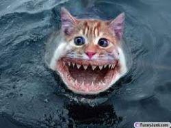scary kitten