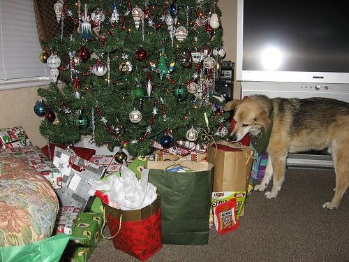 Christmas Morning - Dog Inspects Gifts!
