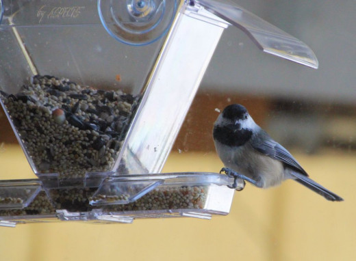 Chickadee at the Window Birdfeer