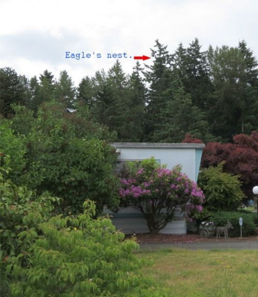 This picture is to show how far away the eagle nest is.  No zoom used on this photo.