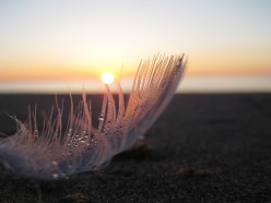 Feathers:  A Poem