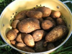 You Can Grow Organic Potatoes, Even In Hot Climates