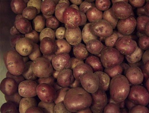 Red Potiac's