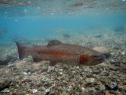 Trout Fishing Spots in Texas & Fly Fishing Tips