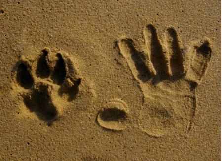 Paw and Hand Print