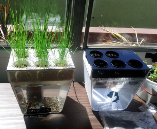 Aquafarm with Wheatgrass by Hackaday. Some Rights Reserved.