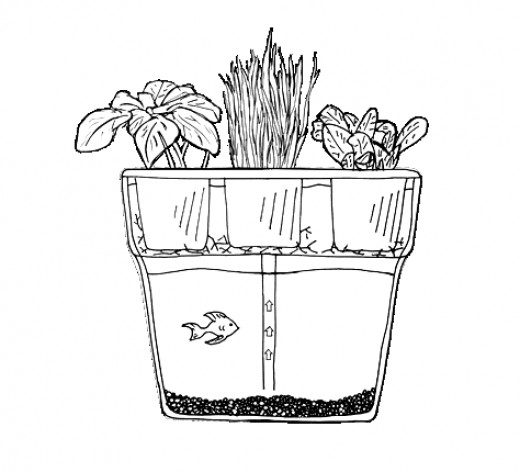 Diagram Sketch of AquaFarm from Back to the Roots.