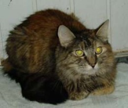 My kitty Koloa