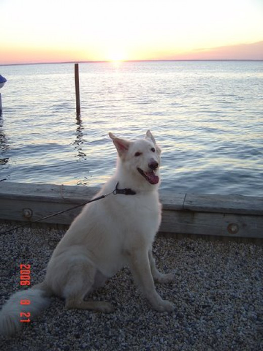Pharaoh Goes To The Shore - He Loves The Water!