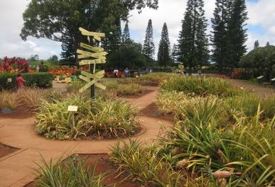 Dole Hawaii