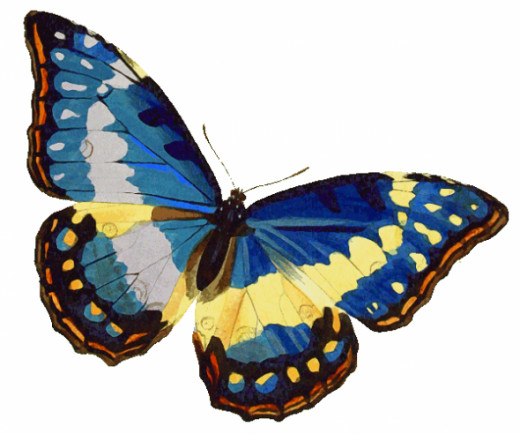Here's a picture of the MORPHO Cypris butterfly from wpclipcart.com